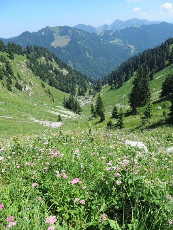 97-Wallberg-Wiesen-Tegernsee-Alpen