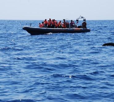 Delphine beobachten mit dem Speedboat auf Madeira