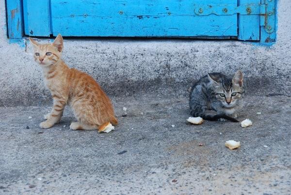 09_Katzenkinder-Santorini