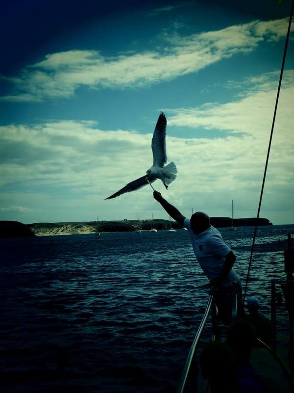 09_Moewe-fuettern-Lanzarote
