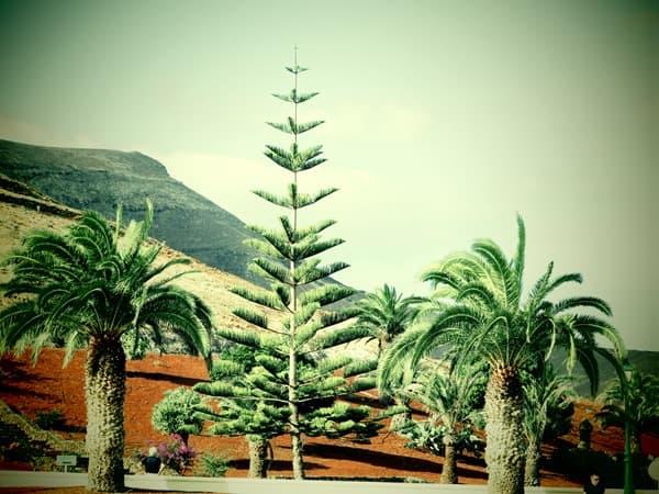01_Marktplatz-Yaiza-Lanzarote