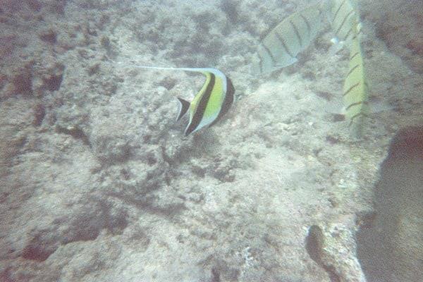 05_Fish-Snorkeling-Hanauma-Bay-Oahu-Hawaii.jpg