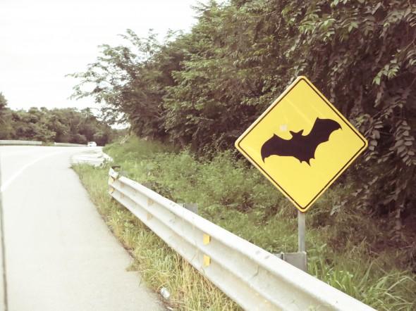 Mexiko: Fledermaus-Wahnsinn im Batman-Style