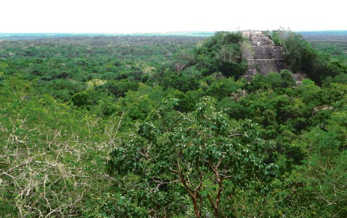 Calakmul Mexiko Maya Hochburg Urwald