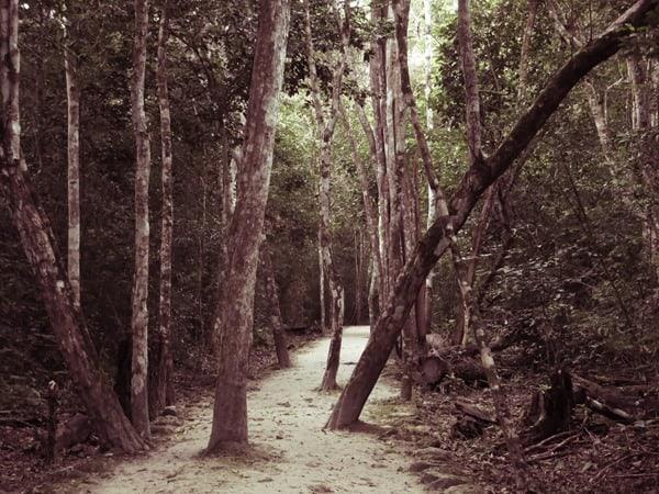 09_Waldweg-Maya-Ruine-Calakmul-Mexiko