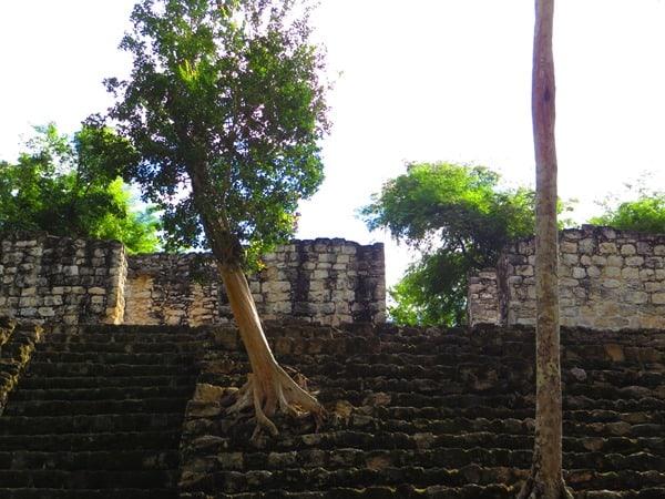 98_Maya-Ruine-Calakmul-Mexiko-Baum