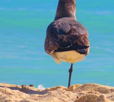 9 Dinge die mich am Pauschalurlaub tierisch nerven
