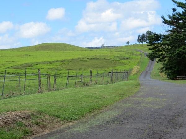 02_Zip-Isle-at-Botanical-World-Hilo-Big-Island-Hawaii