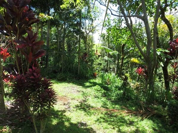 03_Zip-Line-Dschungel-Hilo-Big-Island-Hawaii
