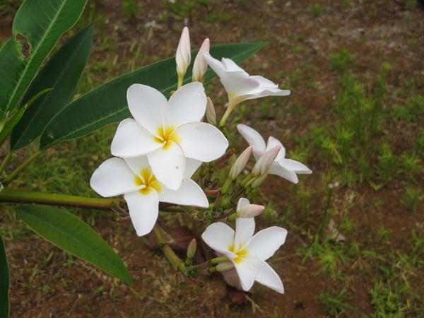 94_Blumen-Botanical-World-Hilo-Big-Island-Hawaii