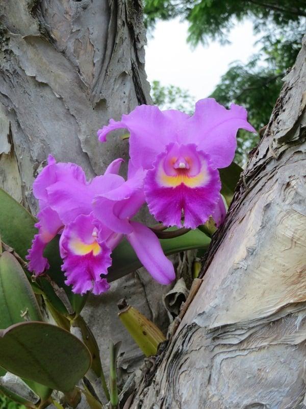99_Orchideen-Botanical-World-Hilo-Big-Island-Hawaii