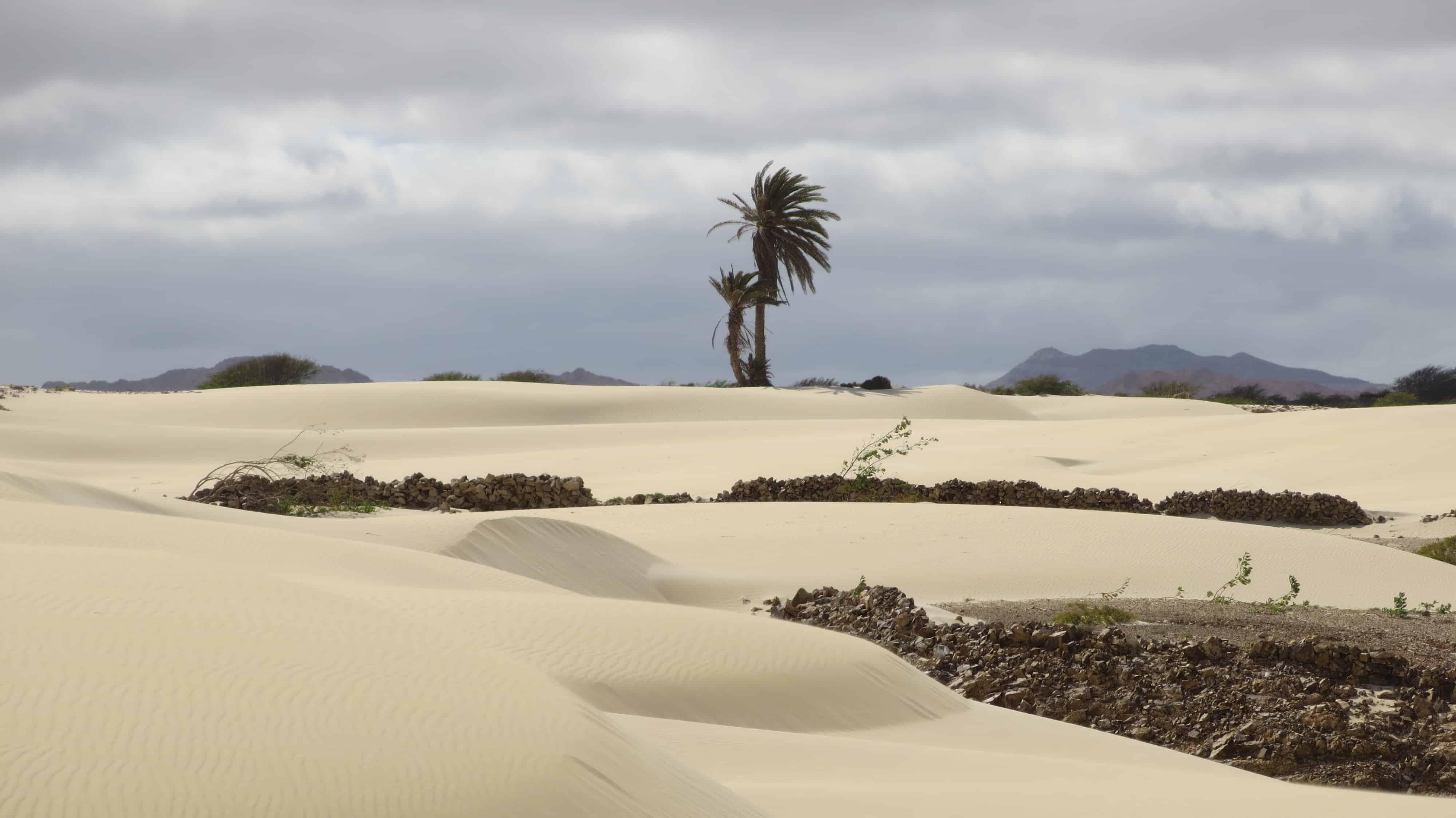 00_Palme-Wueste-Deserto-de-Viana-Boa-Vista-Cabo-Verde-Kapverden