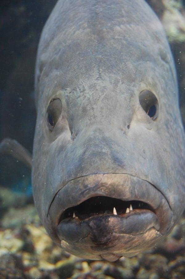04_Fisch-Curacao-Sea-Aquarium