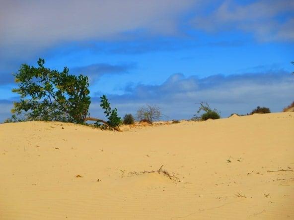 09_Busch-Wueste-Deserto-Viana-Boa-Vista-Cabo-Verde-Kapverden