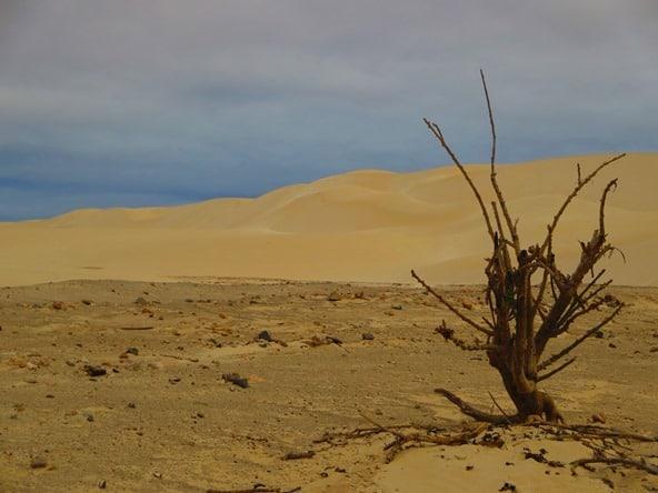17_Busch-im-Sand-Wueste-Deserto-Viana-Boa-Vista-Cabo-Verde-Kapverden