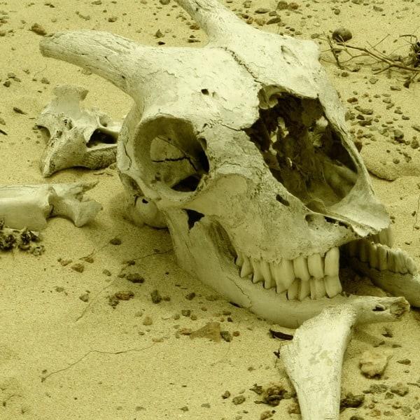 20_Totenschaedel-im-Sand-Wueste-Deserto-Viana-Boa-Vista-Cabo-Verde-Kapverden
