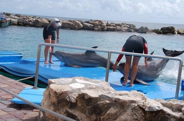 23_Delphin-an-Land-Curacao-Sea-Aquarium