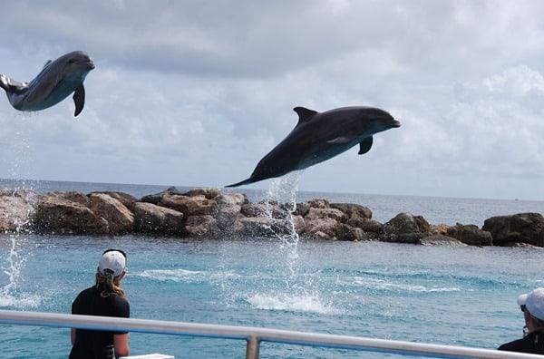 24_springende-Delphine-Curacao-Sea-Aquarium