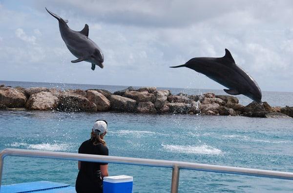 25_synchrone-Delphine-Curacao-Sea-Aquarium