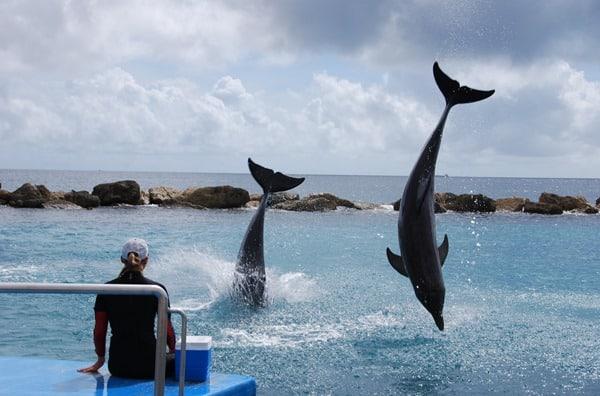 26_eintauchende-Delphine-Curacao-Sea-Aquarium
