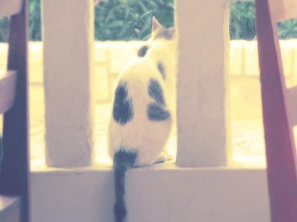 99_Katze-Sal-Rei-Boa-Vista
