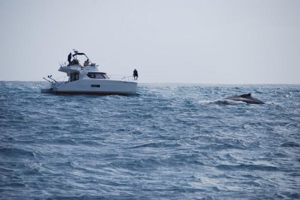 00_Whale-watching-Boa-Vista-Kapverden