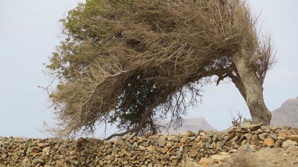 05_Baum-im-Wind-Boa-Vista-Kapverden