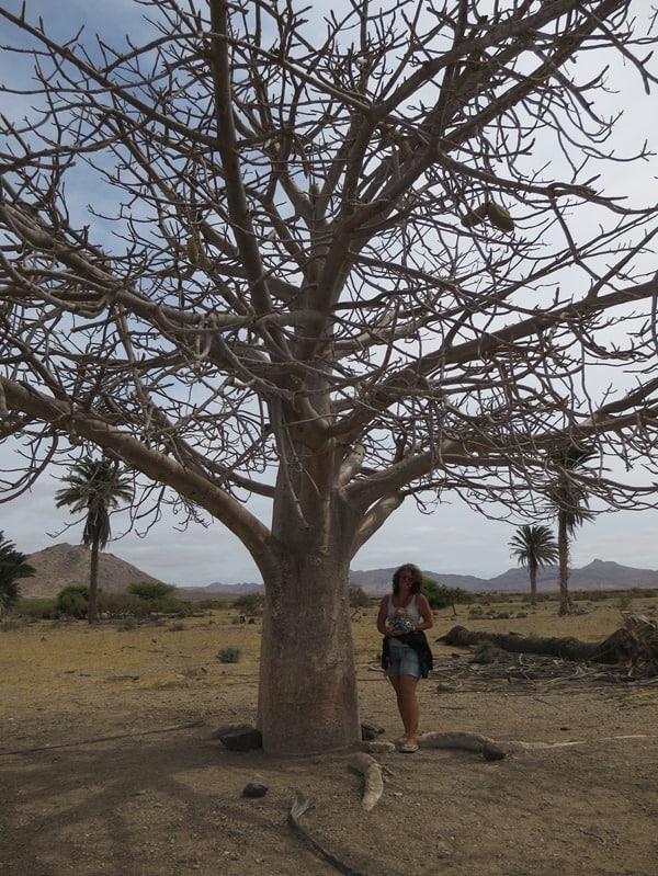 14_Baobab-Baum-Franca-Jack-Bearow-Boa-Vista-Kapverden