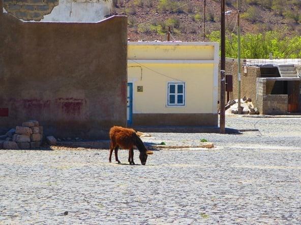 18_wilder-Esel-Velha-Boa-Vista-Kapverden