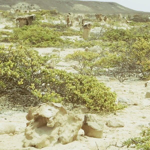 20_Naturkunst-Curral-Velho-Boa-Vista-Kapverden