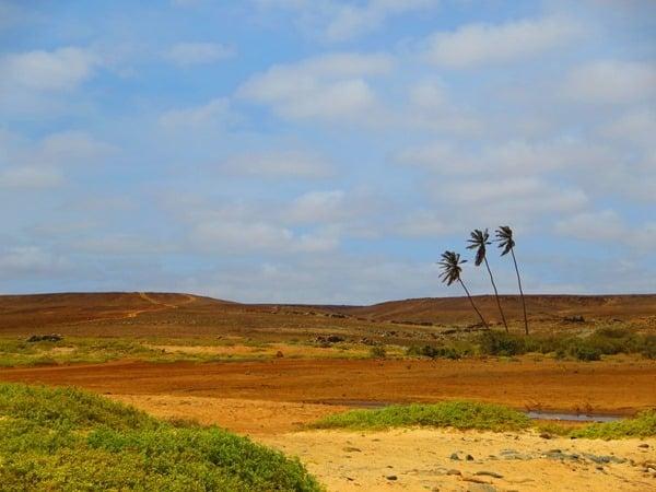 33_Drei-Palmen-Wilder-Osten-Boa-Vista-Kapverden