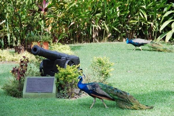 12_Appleton-Garten-Jamaika
