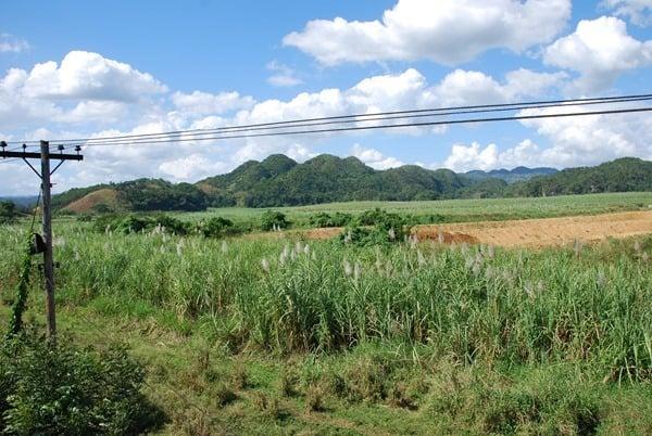 Zuckerrohr-Plantagen