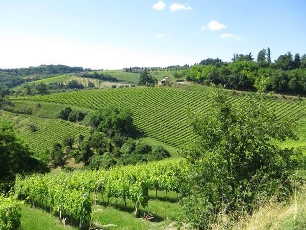 02_Weinanbaugebiet-Emilia-Romagna-Italien