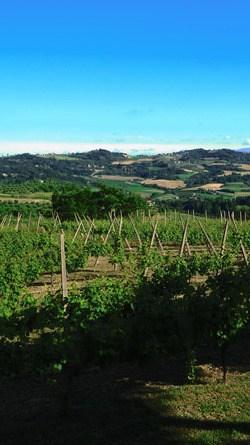 05_Weinberge-Emilia-Romagna-Italien