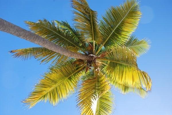 17_Palme-am-Strand-The-Baths-Virgin-Gorda-British-Virgin-Islands
