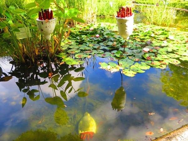 06_Blueten-im-Teich-Botanischer-Garten-Lissabon-Portugal