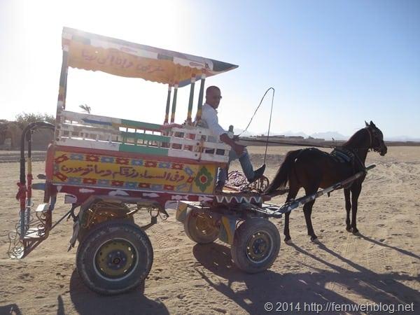 08_Pferdekutsche-Wueste-Hurghada-Aegypten