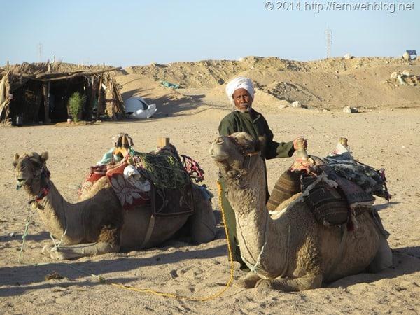10_Kamele-Wuestenschiffe-Wueste-Hurghada-Aegypten