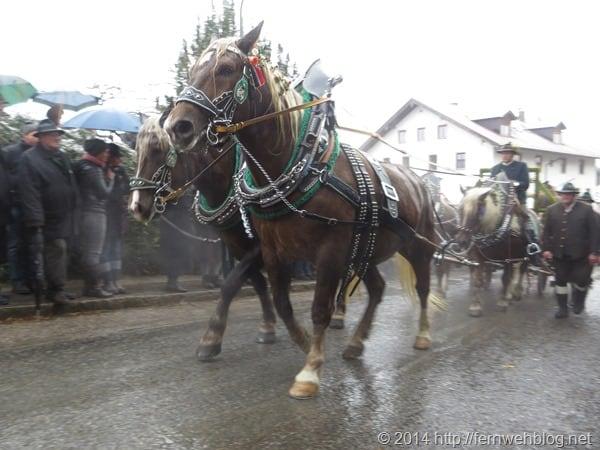 10_Kutsche-Vollgas-Leonhardi-Wallfahrt-Bad-Toelz-Oberbayern-Bayern