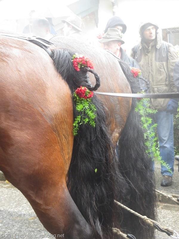 11_Pferd-geschmueckt-Leonhardi-Wallfahrt-Bad-Toelz-Oberbayern-Bayern