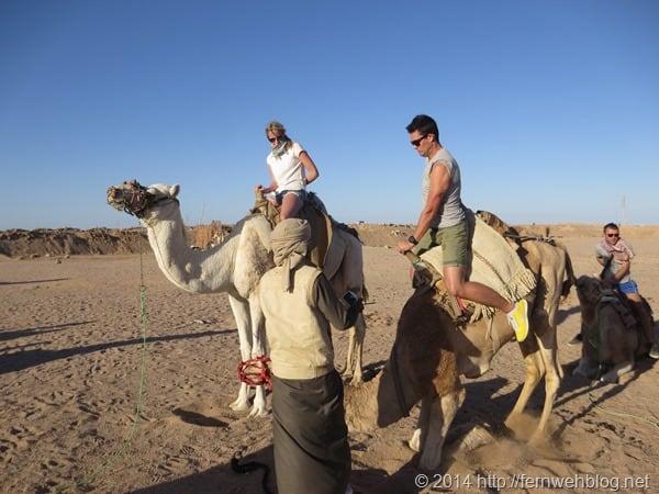12_Kamel-absteigen-Wueste-Hurghada-Aegypten