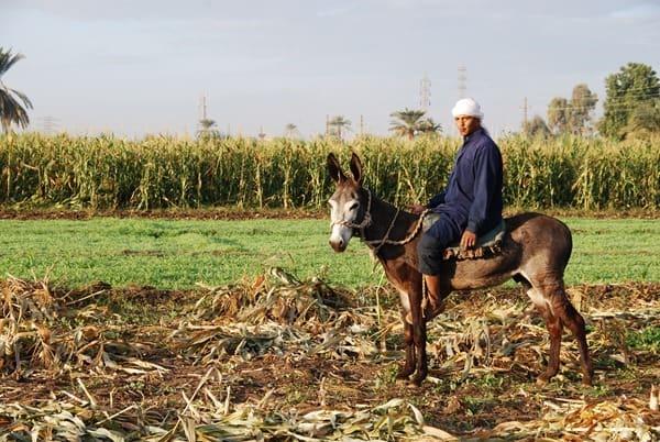 20_Bauer-auf-Esel-bei-Luxor-Aegypten