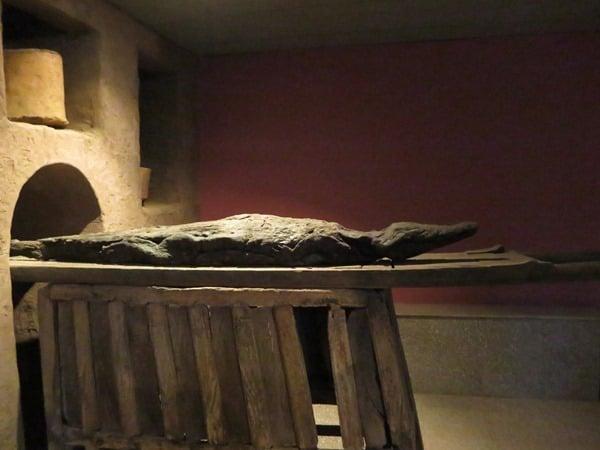 21_Krokodilmumie-Krokodilmuseum-Kom-Ombo-Nilkreuzfahrt-Nil-Aegypten