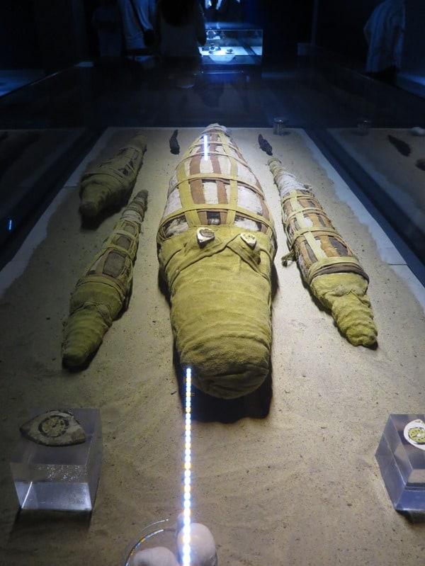 22_Krokodilmumie-Krokodilmuseum-Kom-Ombo-Nilkreuzfahrt-Nil-Aegypten