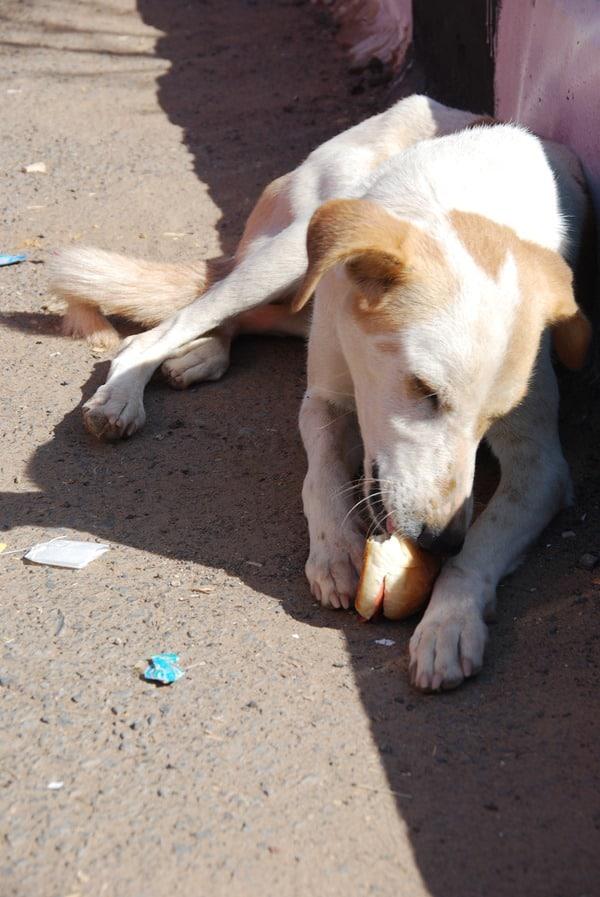 29_Hund-in-Abu-Simbel-Aegypten-Nilkreuzfahrt