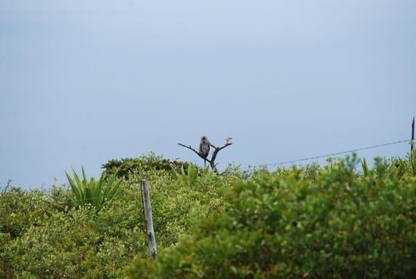 11_Affe-Makake-Mauritius-Nature-Trails-Ausflug