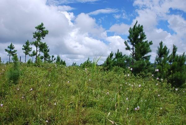 20_Hochebene-Mauritius-Nature-Trails-Ausflug