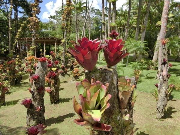 25_Botanischer-Garten-Martinique-Karibik