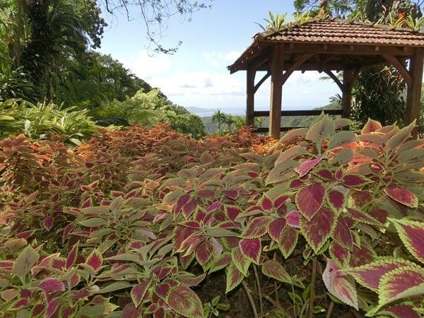 26_Martinique-botanischer-Garten-Karibik